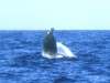 1鯨のダンス